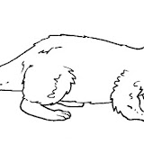 lontra.jpg