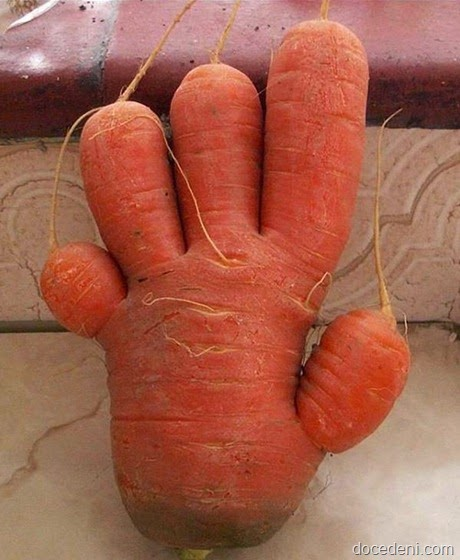 legumes e formas4