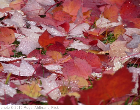 'Fall 005' photo (c) 2010, Roger Ahlbrand - license: http://creativecommons.org/licenses/by/2.0/