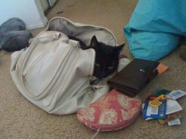 Os gatos não são muito bons em esconde-esconde 14