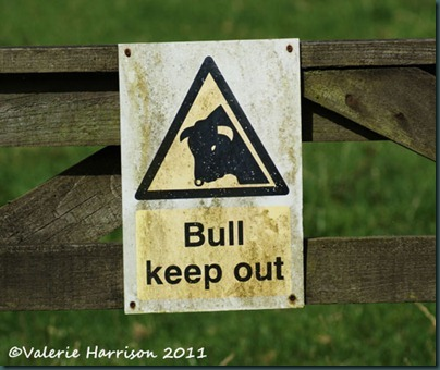 6-beware-of-the-bull