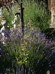 garden june 2011 008