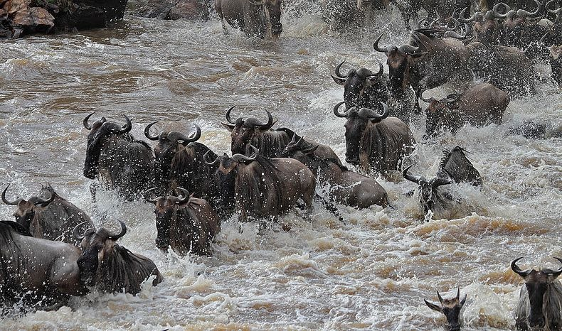 mara-river-crossing-5