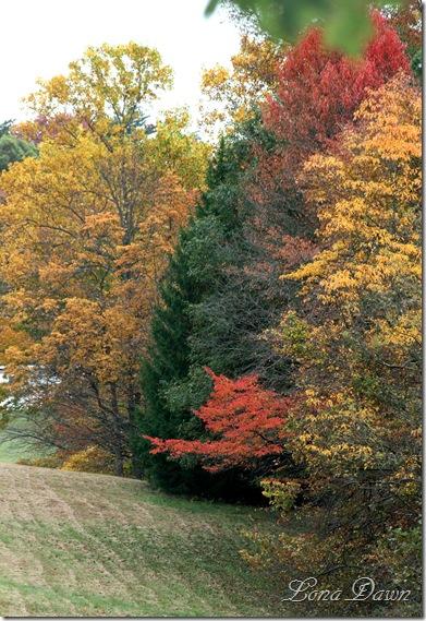 Fall_Field_2011