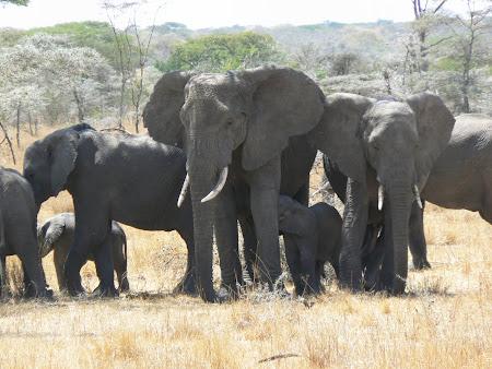 Safari: Amboseli