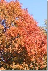 2014-10-26 Oct 26 015