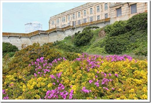 120408_Alcatraz_220