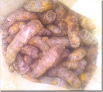 2 pounds of Turmeric rhizomes