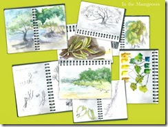 sketches of mangroves