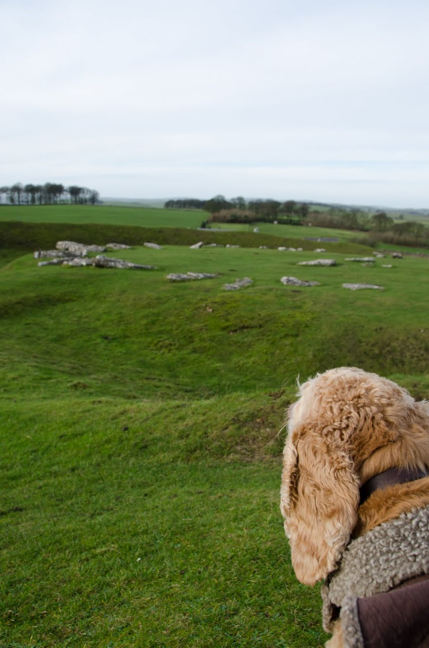 Chewy looking at Arbor Low