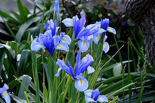 Azul - Glória Ishizaka 37