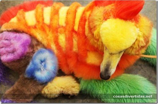 cosasdivertidas animales teñidos  (18)