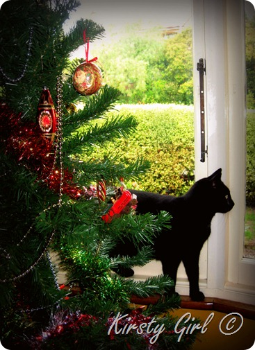 Christmas Cats 1