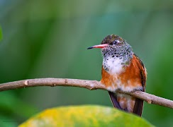 2013-4-25-dierentuin-kolibrie.jpg