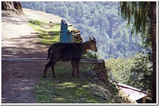 Bhutan 236