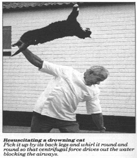 drowningcat