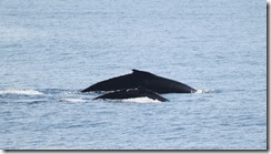 Mom and baby whale