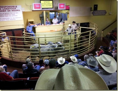 Nacogdoches livestock auction (3)