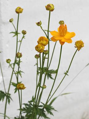 det blomstrer i hagen2