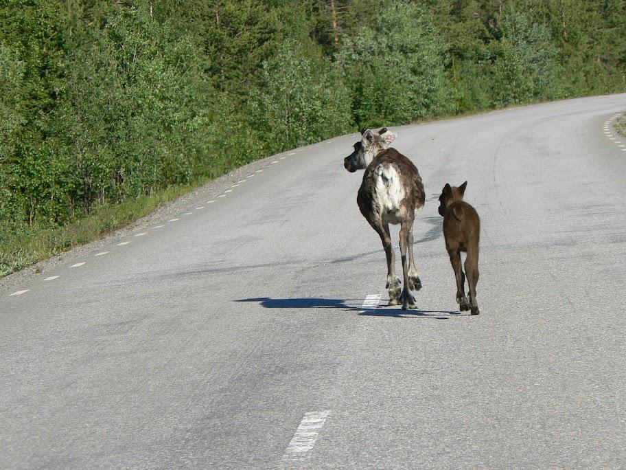 Lapland Ultra: 100km (26h) en Laponie: 28-29 juin 2013 P1040021