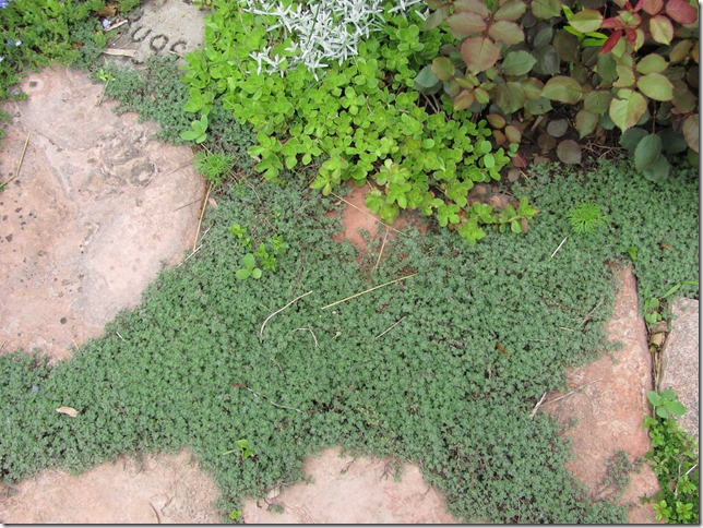 Dakota Garden: Beautiful Ground Covers Instead of Mulch