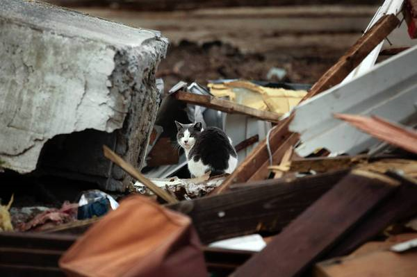 A cat explores the rubble of a home damaged by Superstorm Sandy in October in the New Dorp area of Staten Island, 1 February 2013. A volunteer aid center has been told to leave a park, but many victims living in temporary housing say they still need its help. Carolyn Cole / Los Angeles Times