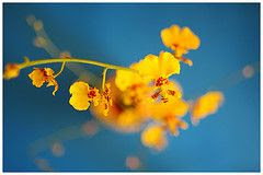 yellowbudsagainstbluesky.91057511_cc389f7986_m.jpg