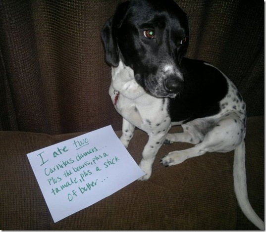 dog-shaming-bad-10