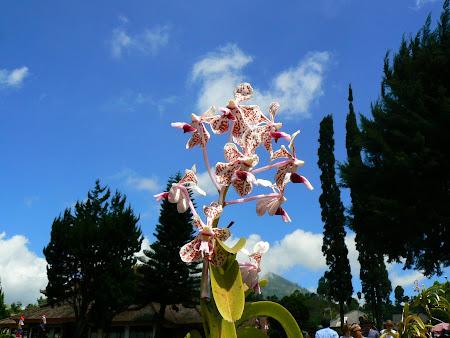 Bali picture: Bedugul flower