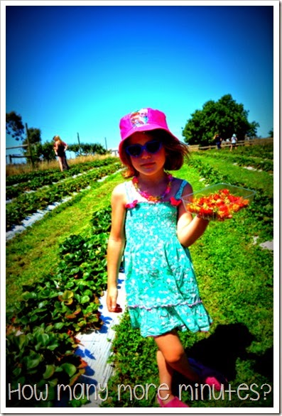 Shepparton: Belstack Strawberry Farm ~ How Many More Minutes?