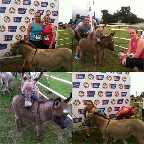 Donkey Dash collage