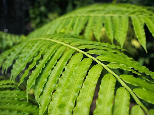 [写真]温室の中の熱帯植物(4)