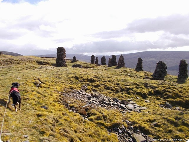 cairns and crossbred collie on talkin fell