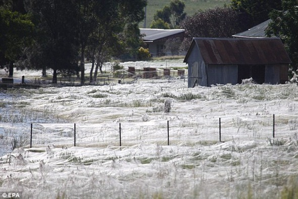 Evacuees from Wagga Wagga returned home to find the landscape covered in cobwebs