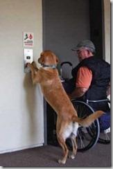 cane ascensore