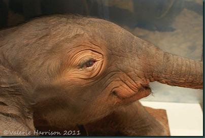 21-baby-elephant