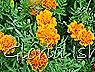 Glória Ishizaka -   Kyoto Botanical Garden 2012 - 84