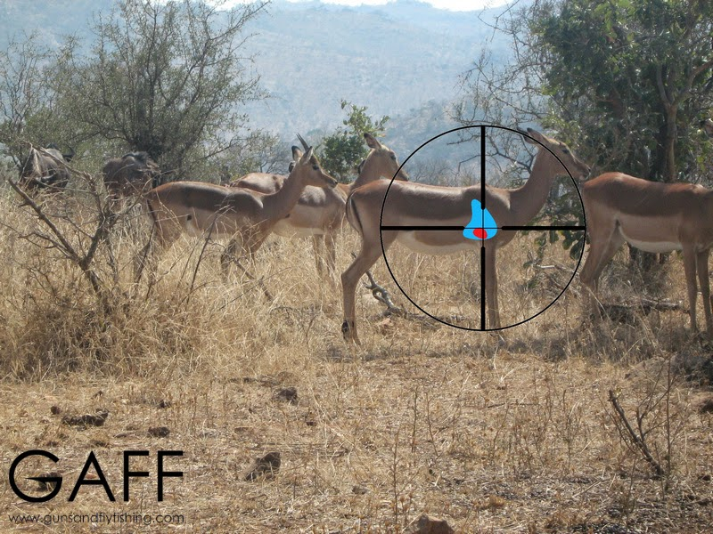 Impala-hunting-shot-placement (1).jpg