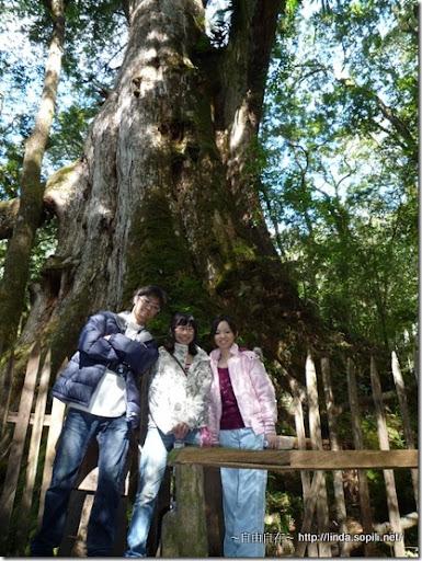 司馬庫斯-day2-巨木7