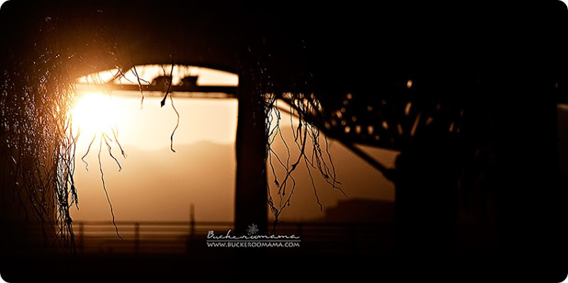 Sunset-(1)