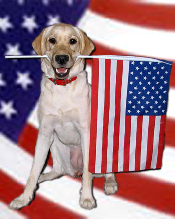 Don't forget to honor the many service dogs who also serve, and have served, this country to a defend our independence and freedom!