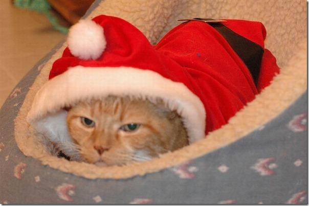 Gatos odeiam o natal (3)