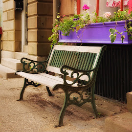 Wickford Main Street by Alan Roseman - City,  Street & Park  Street Scenes ( wickford, benches, rhode island, nice, lovely, summertime, pretty, comfortable,  )