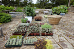 Planting The Skylands Terraces And Containers