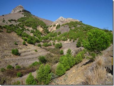 Bäume_gegen_Erosion