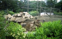 2002.06.10-154.27 hamadryas