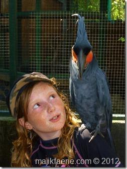 35-gili-meno-bird-park-480x640_thumb