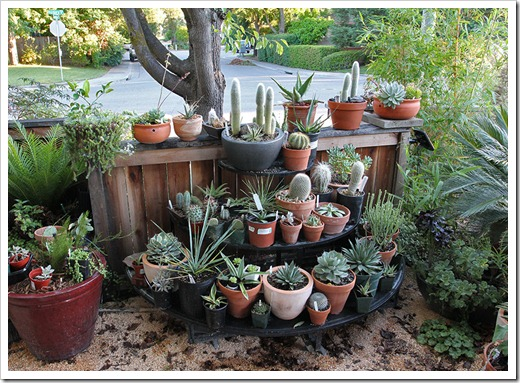 Keeping my succulents dry