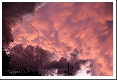 2011 06 21 IMG_2936w