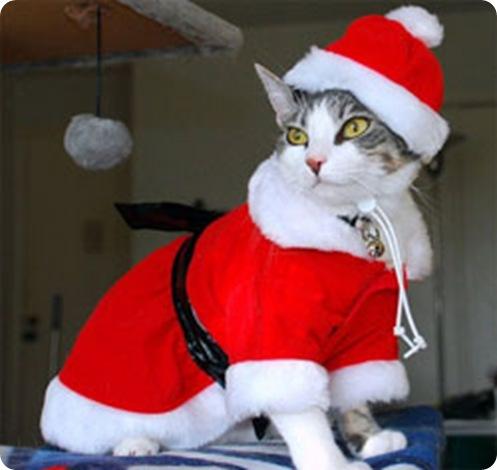 gato-disfraz-de-papa-noel